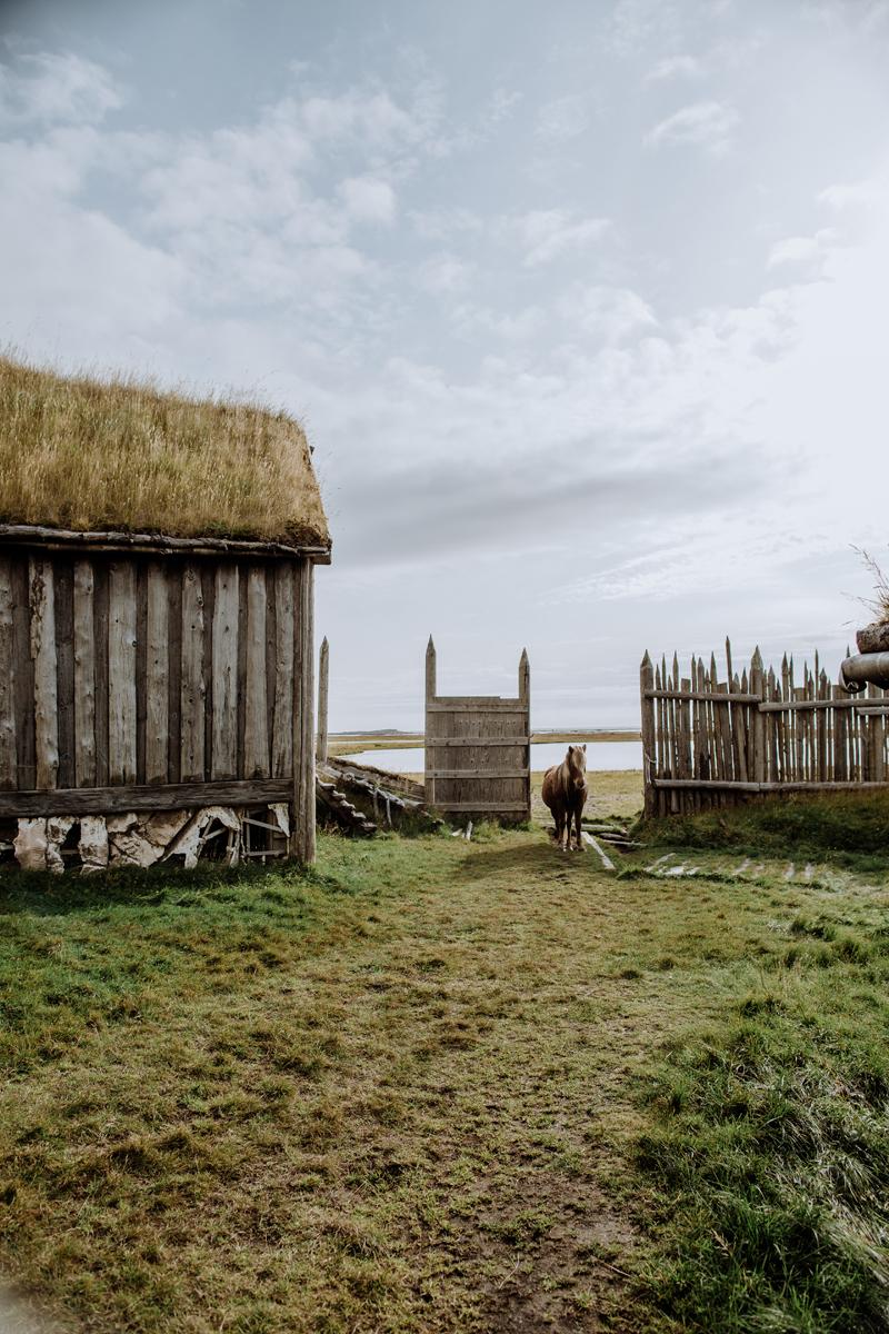 icelandic-horse-viking-movie-set-adventure