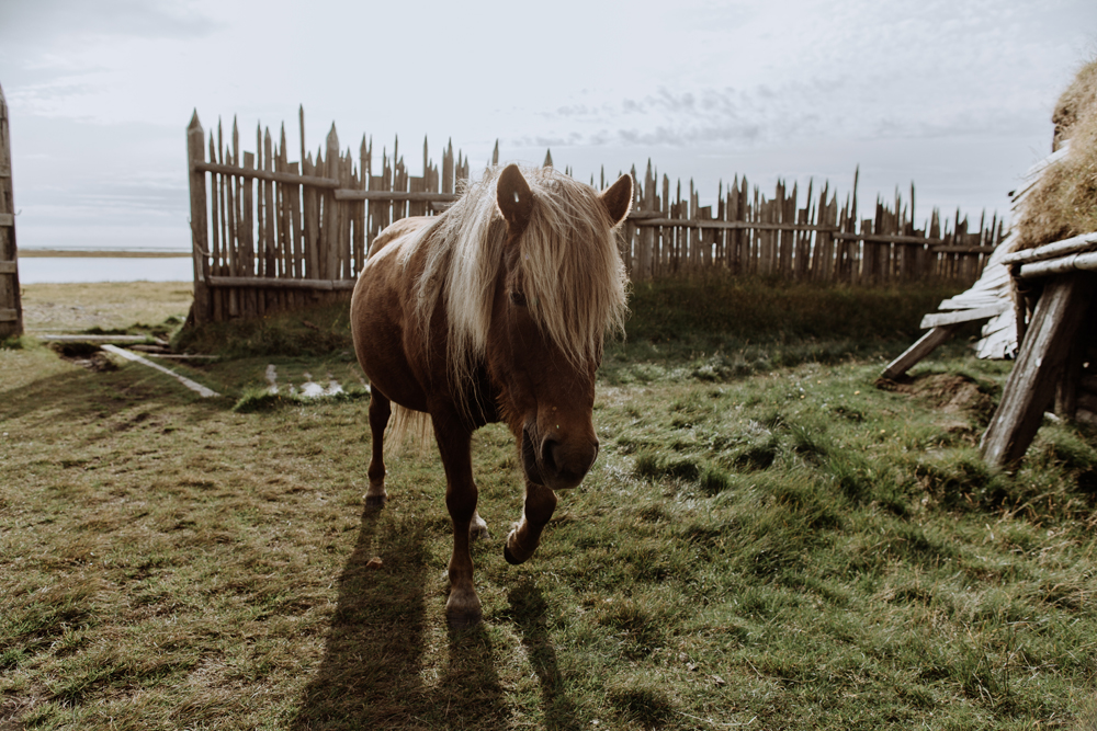icelandic-horse-viking-movie-set-adventure-2