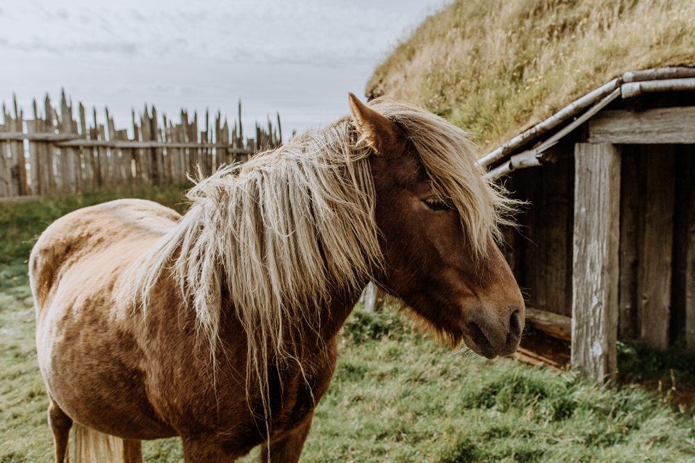 icelandic-horse-viking-movie-set-adventure-greg
