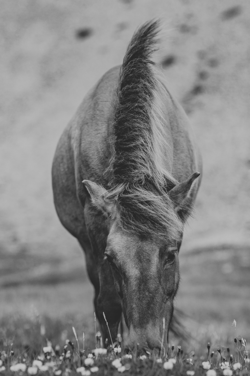 icelandic-horse-viking-movie-set-adventure-3