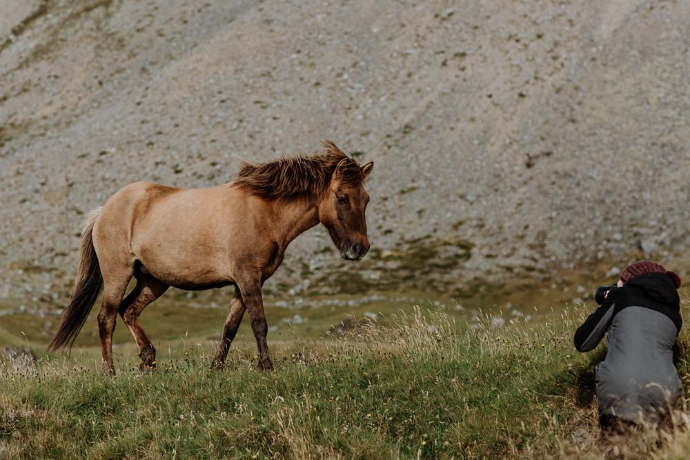 photographing-icelandic-horses