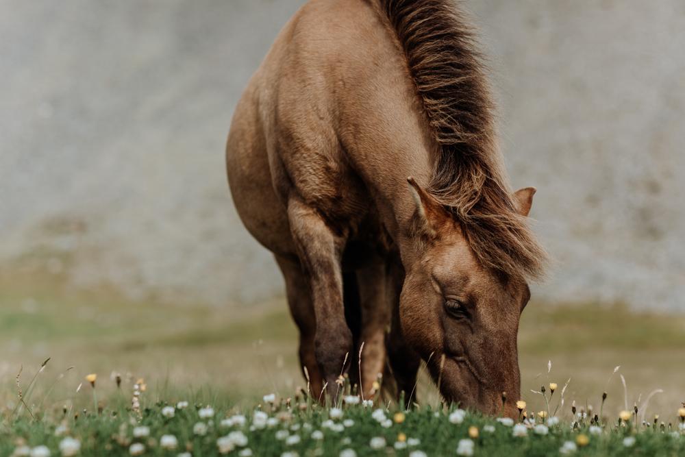 icelandic-horse-viking-movie-set-adventure-5