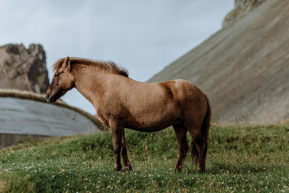 icelandic-horse-viking-movie-set-adventure-travel-6