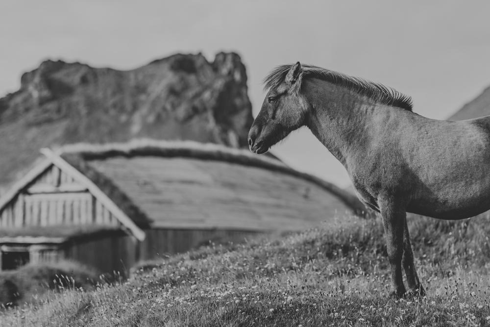 icelandic-horse-viking-movie-set-adventure-travel