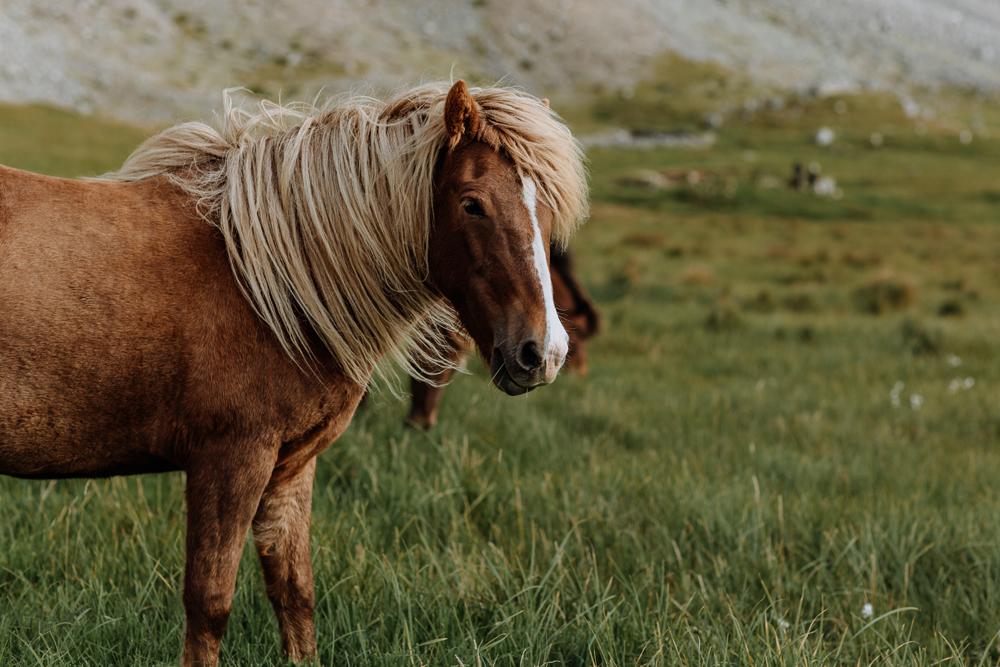icelandic-horse-viking-movie-set-adventure-travel-3