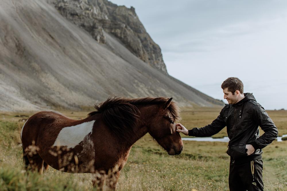 feeding-iceland-horse