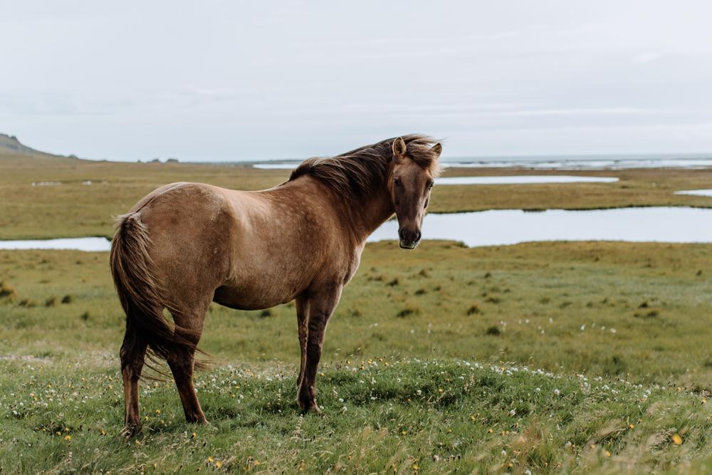 vetrahorn-viking-movie-set-horse