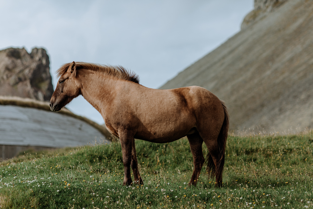 iceland-points-of-interest-horses