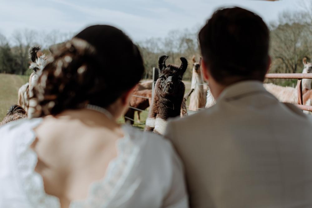 edward-and-daniela-wedding-llamas
