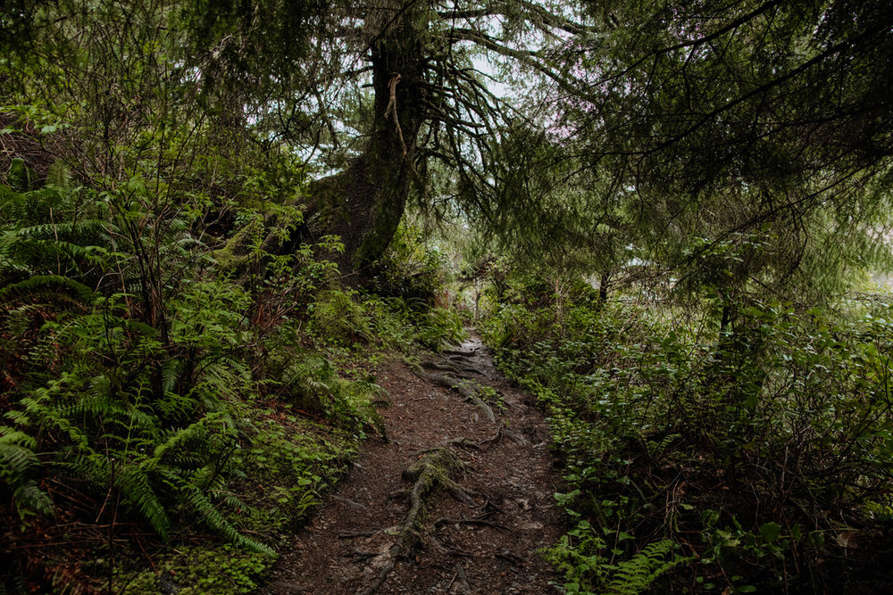 oregon-travel-photographers-oswald-state-park-beach-forest