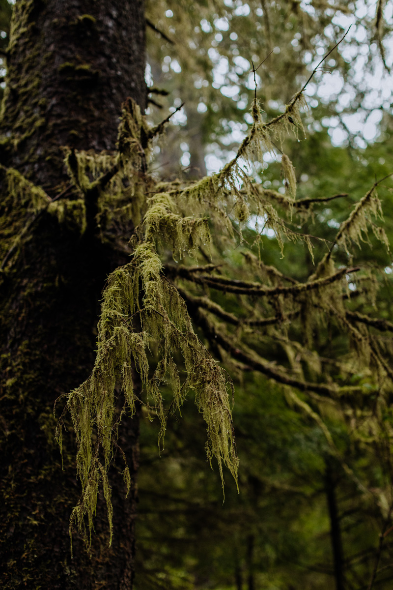 Oregon-Mossy-Forest