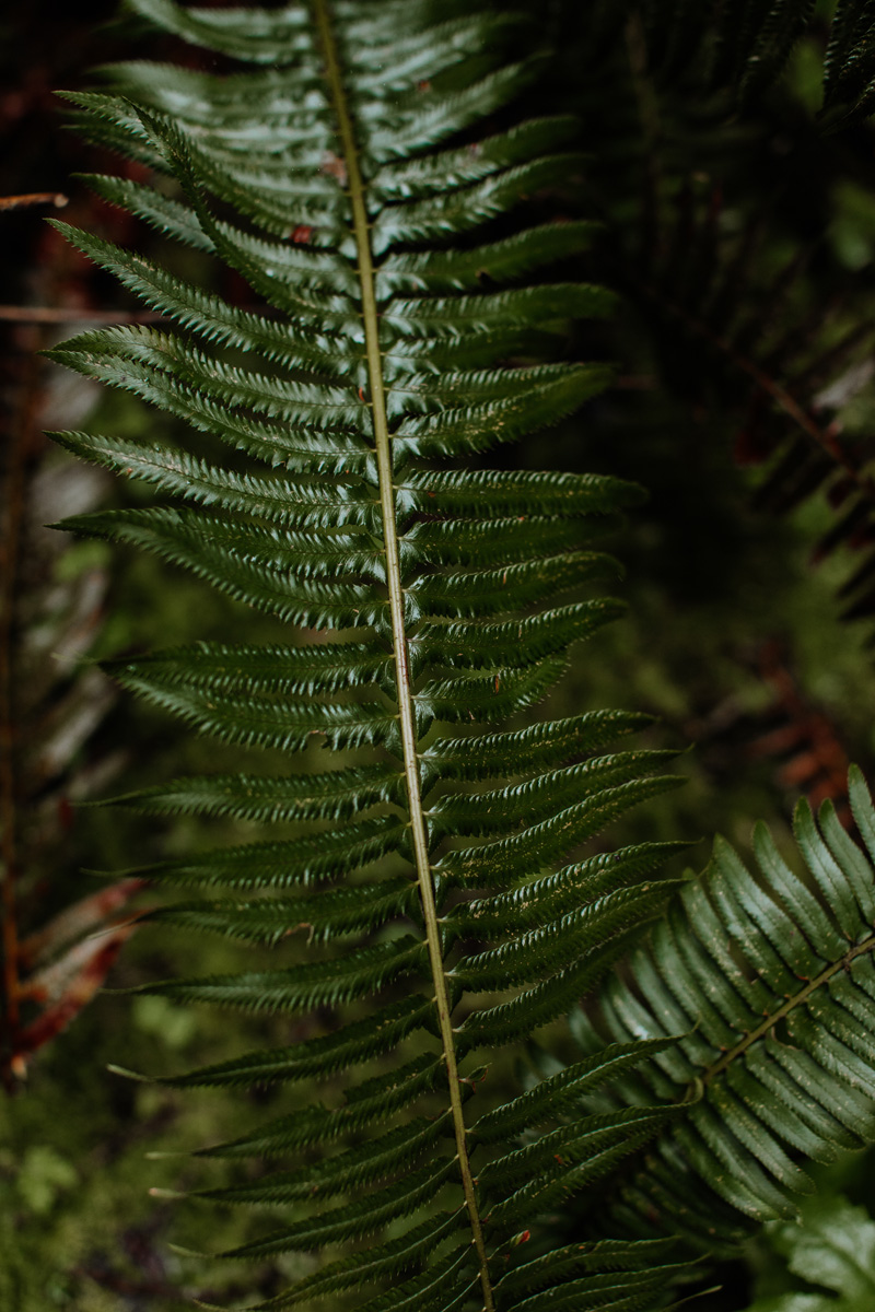 Oregon-Green-Ferns