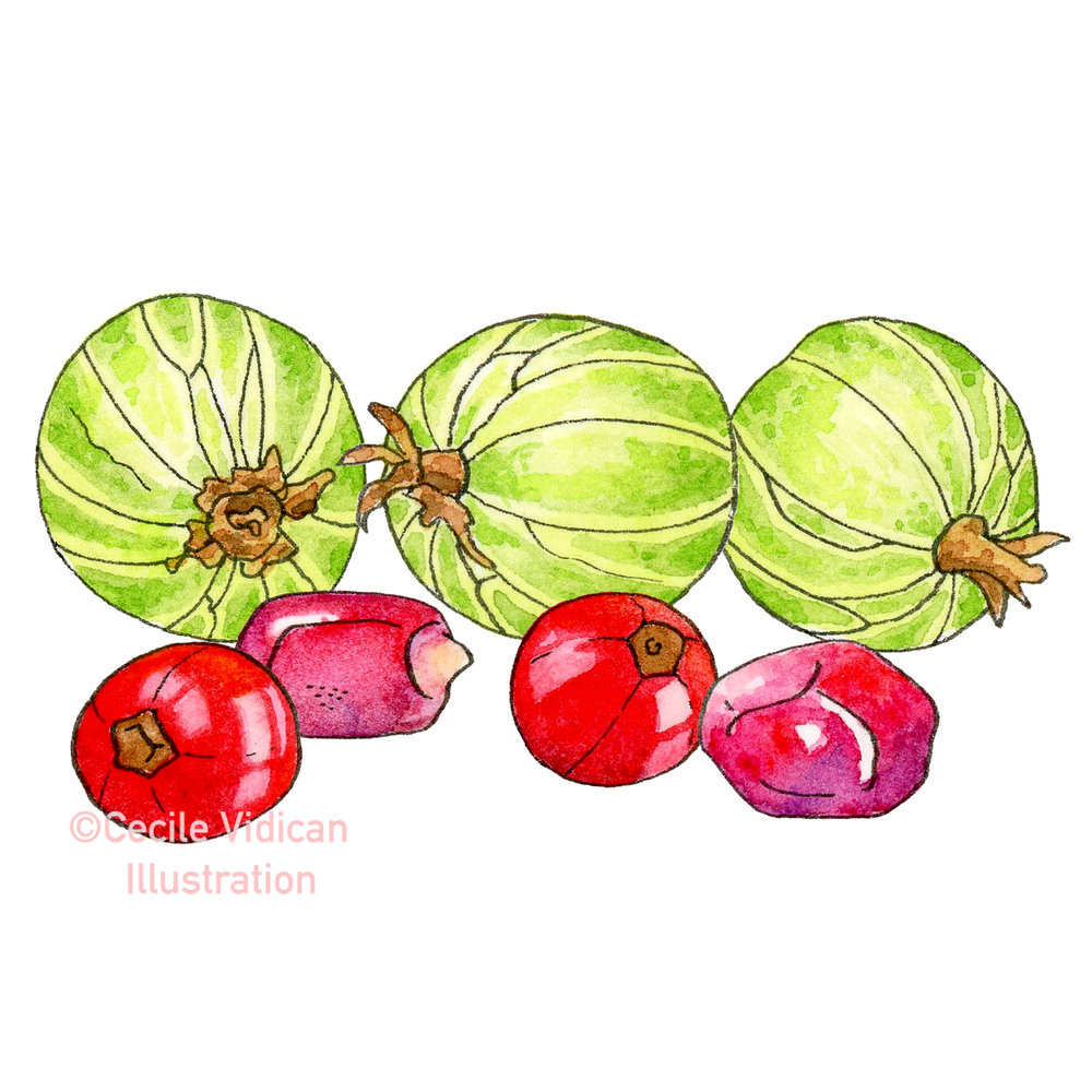 Gooseberries, Currants and Pomegranate