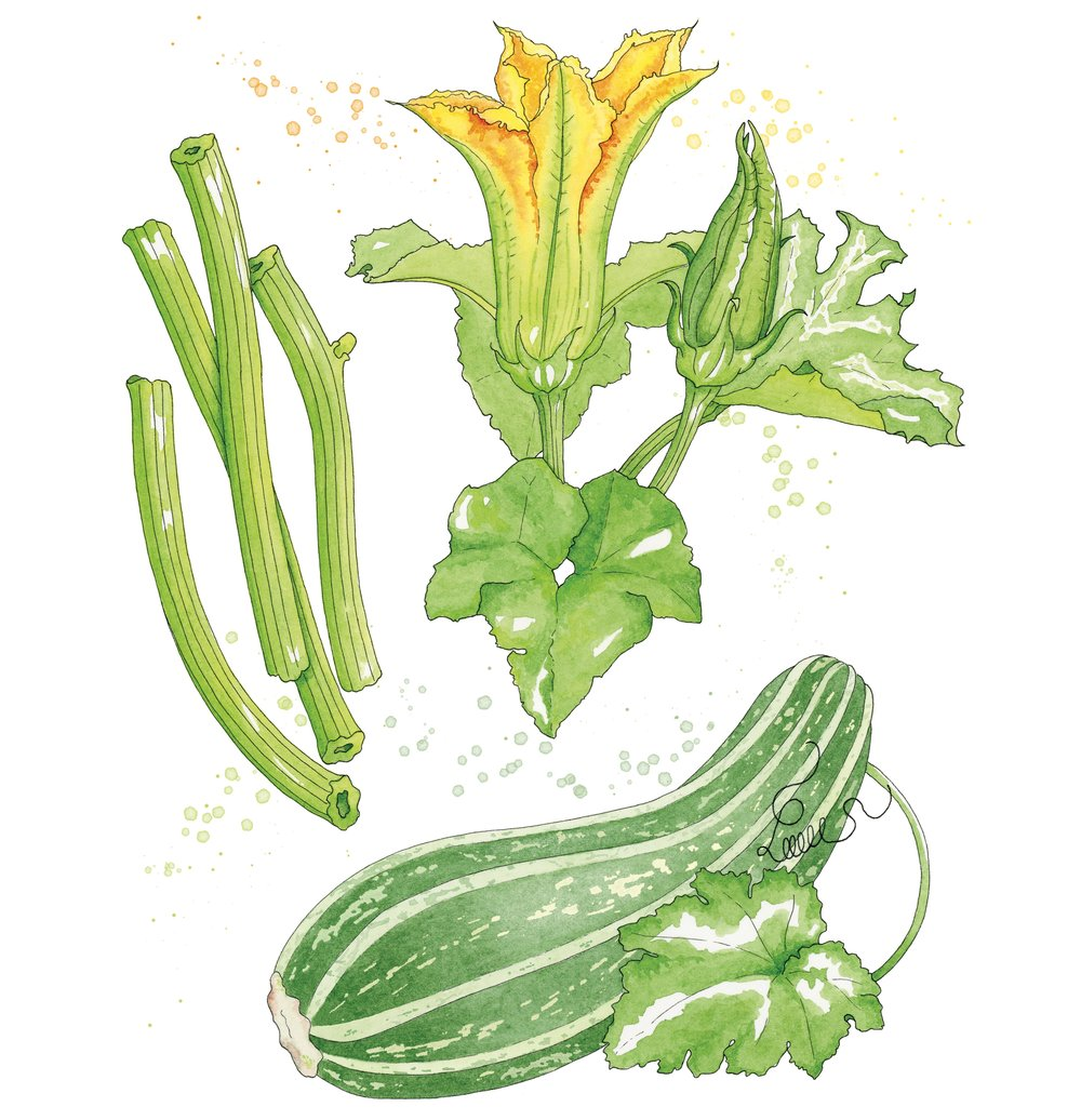 Zucchini (featured in  Edible Cleveland  magazine)