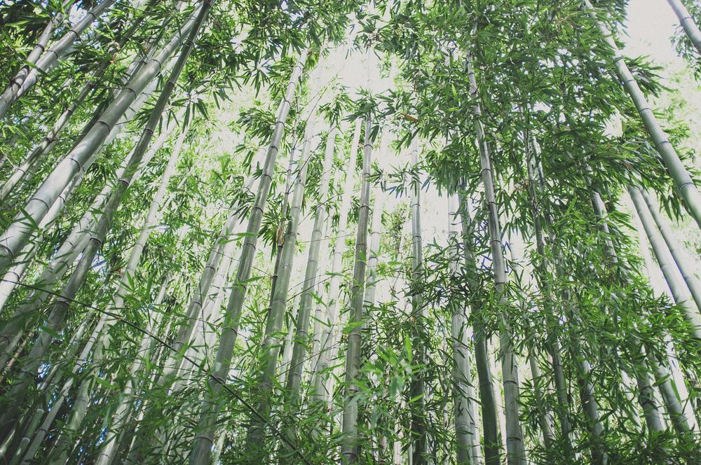 20130831_Arboretum_01.jpg