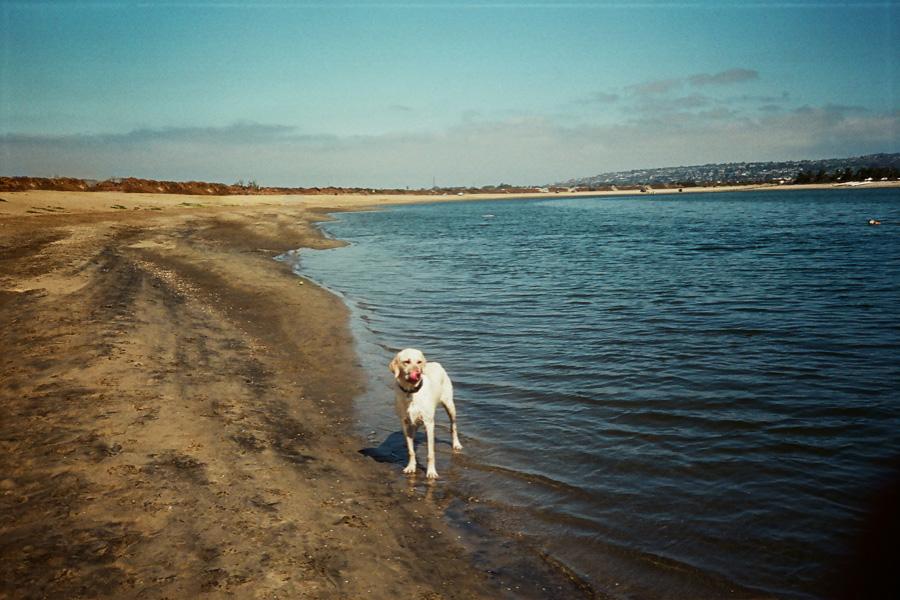 Pups - .jpg