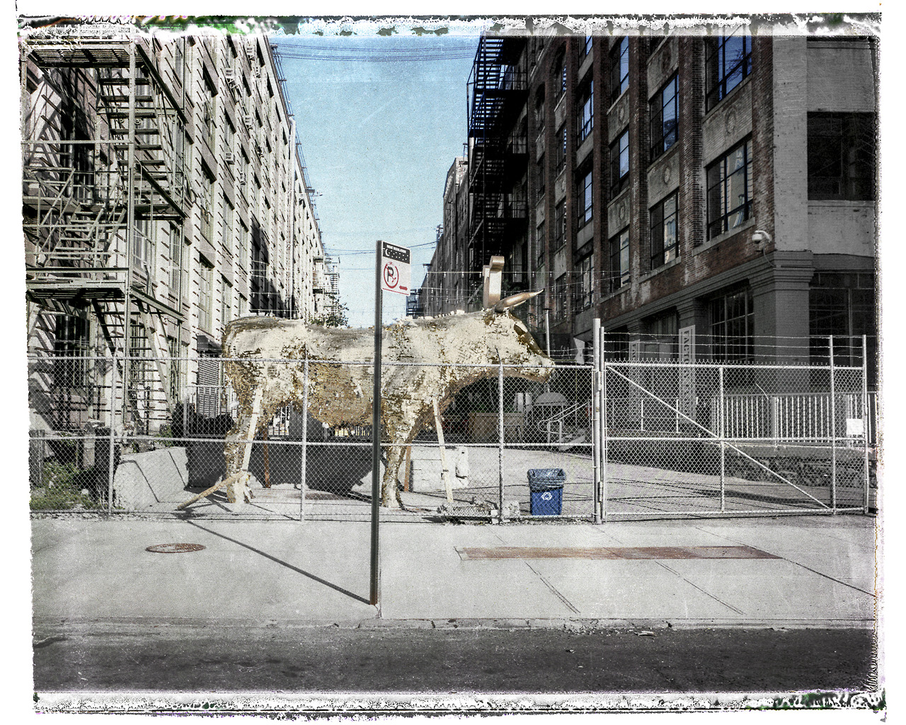 Golden Bull of Red Hook Shot on fp-100c