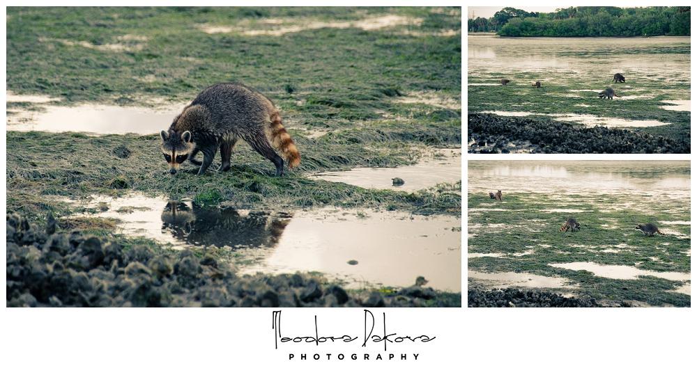 Teodora Dakova Photography-8990.jpg