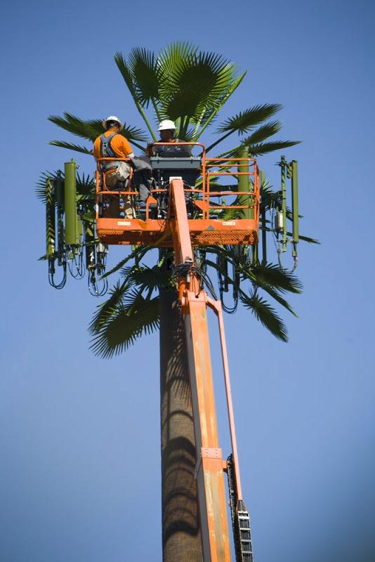 ajh.palmpole.jpg