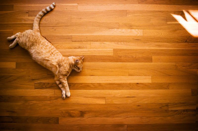 andiejael_gizmo_orange-cat_01.jpg