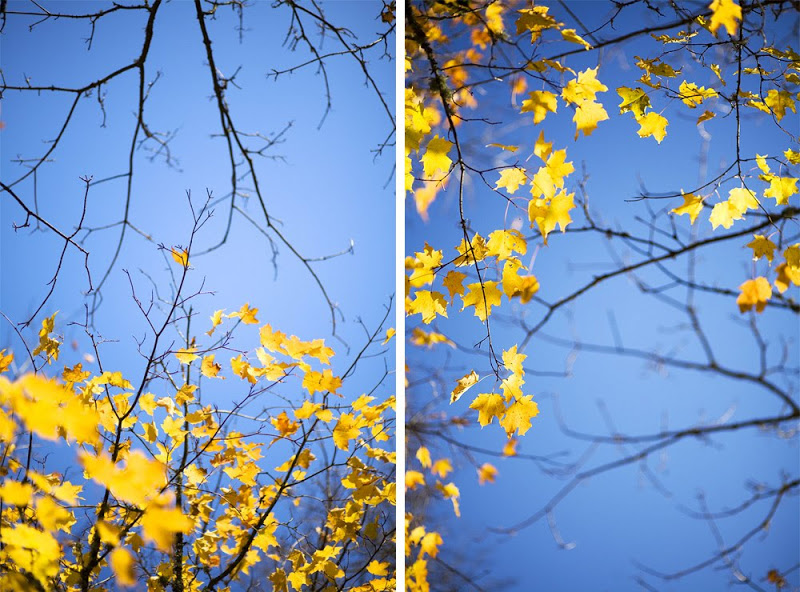 andiejael_fall-leaves-sky-portland_01.jpg