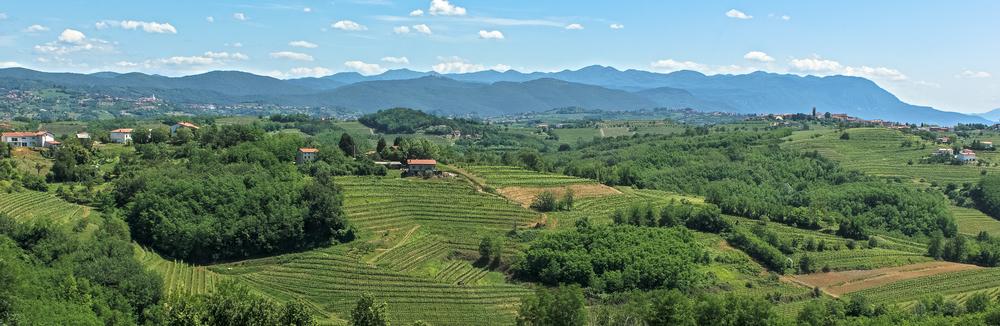 Nando landscape.jpg