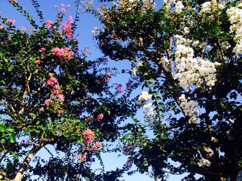 In Roppongi Hills   -Fucking flowers.