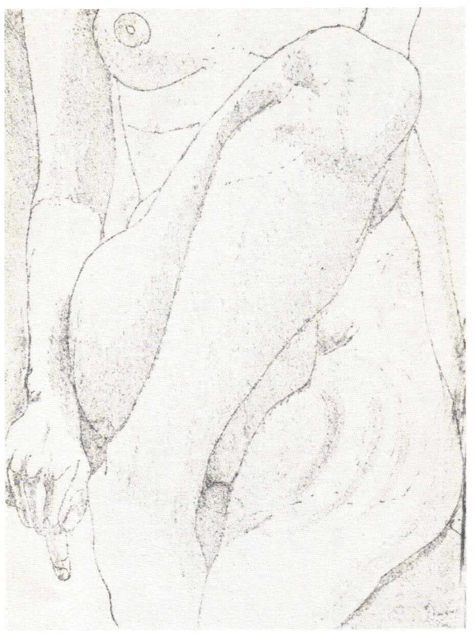 1976, Small Nude, 18.9x13.8 cm, soft-ground etching.jpg