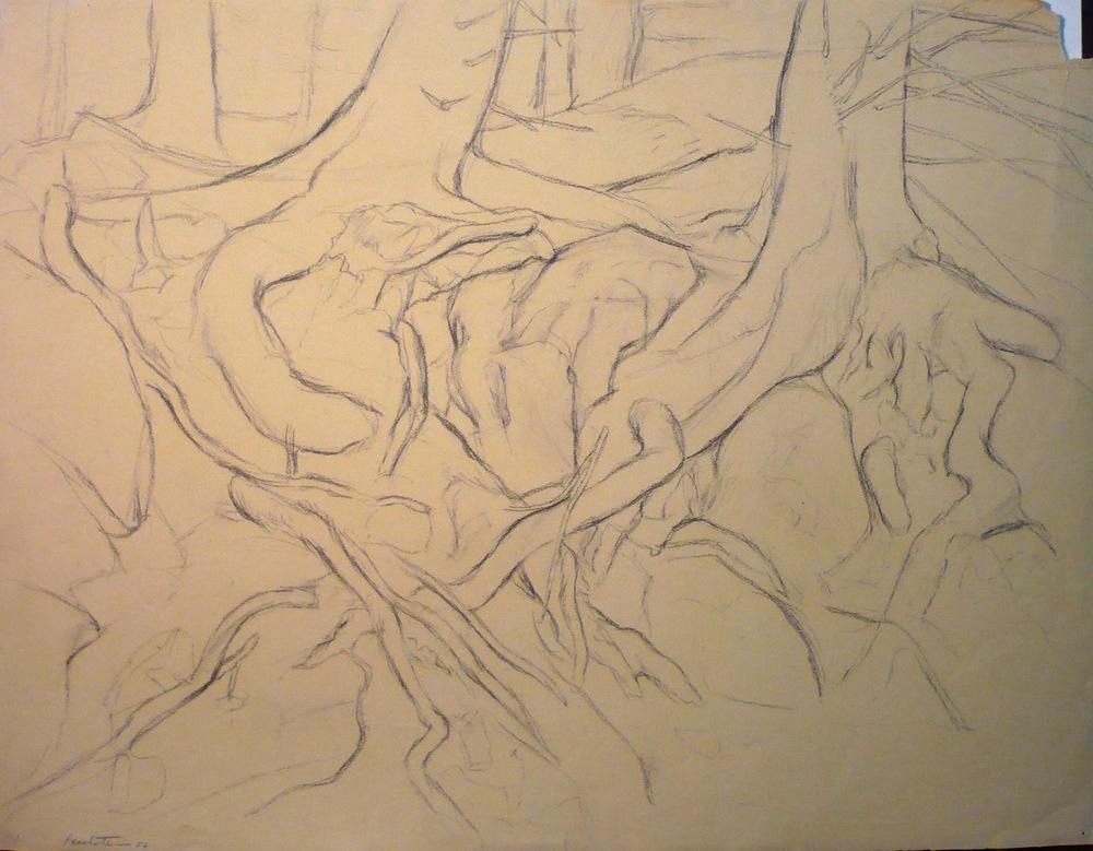 Deer Isle Roots , 1956 Charcoal 19x24.75