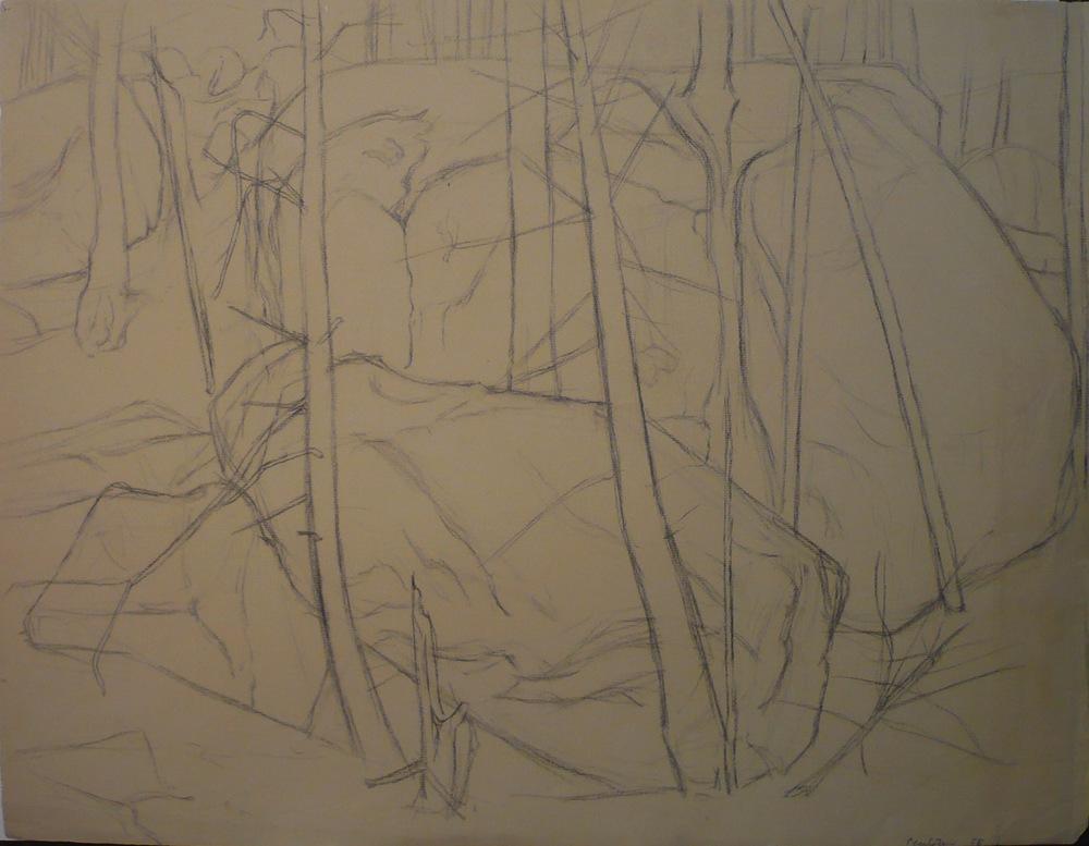 Forest Landscape , 1956 Charcoal 19x25.625