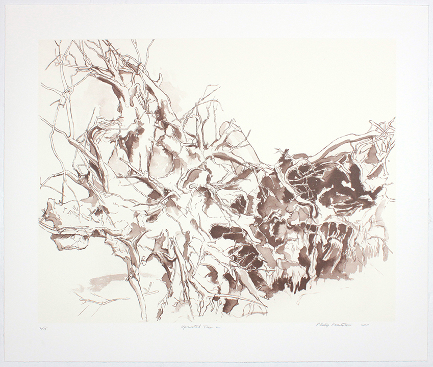 Uprooted Tree II , 2011 From a portfolio of 10 prints Laser prints 20 1/2 x 24 1/2 inches