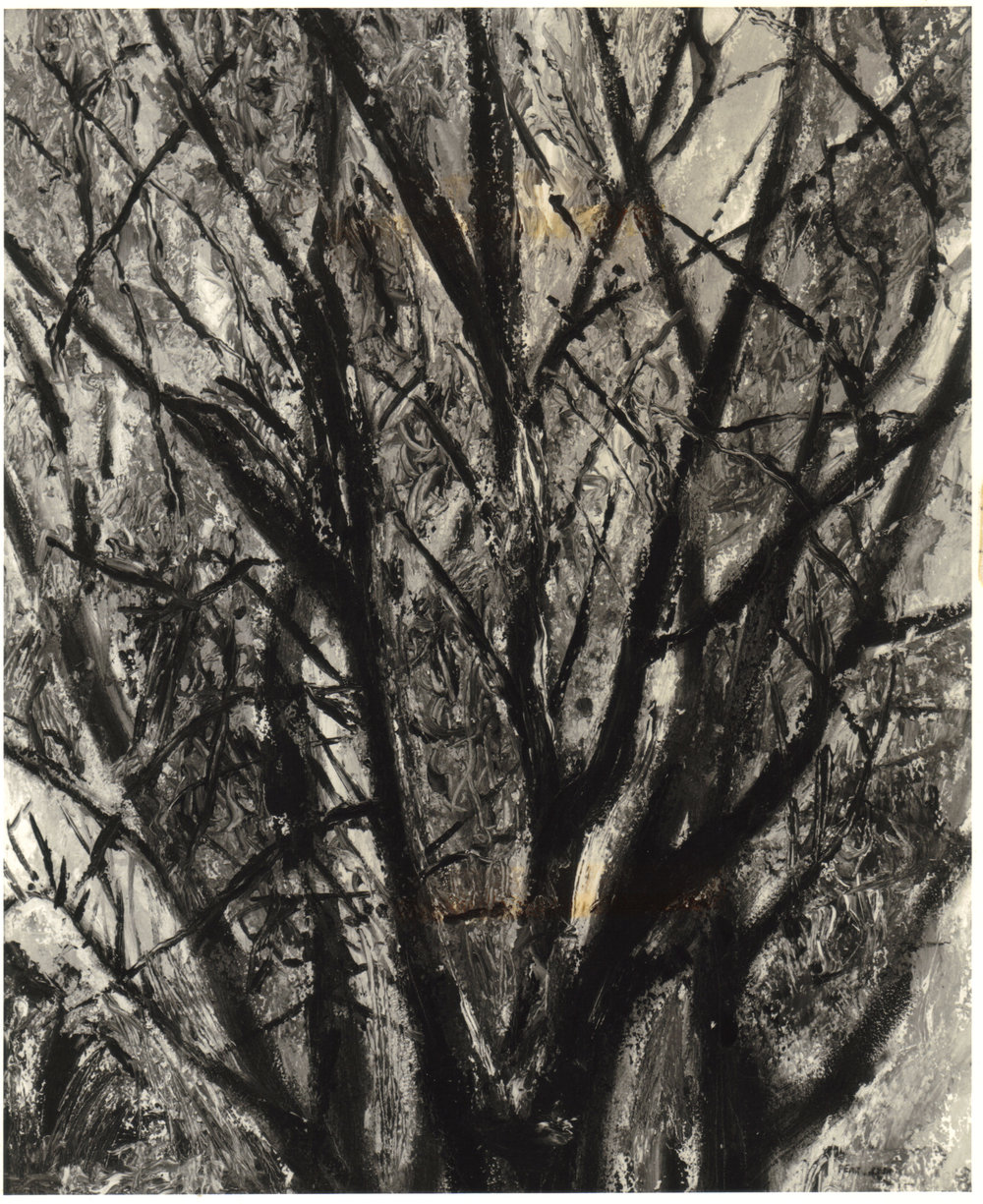 28. 1948, Tree Branches, Oil on board, 20x17, 1948.jpg