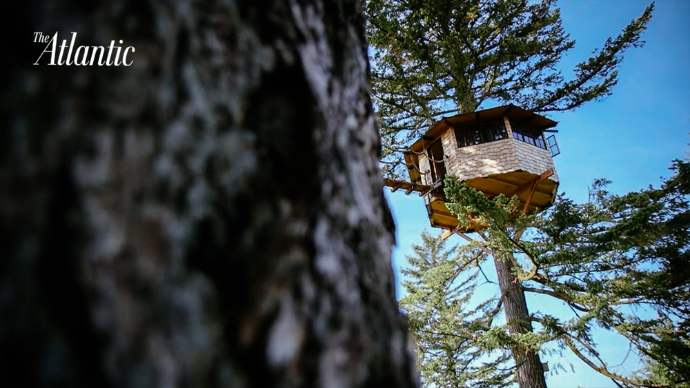 Would you Live in a Treehouse?