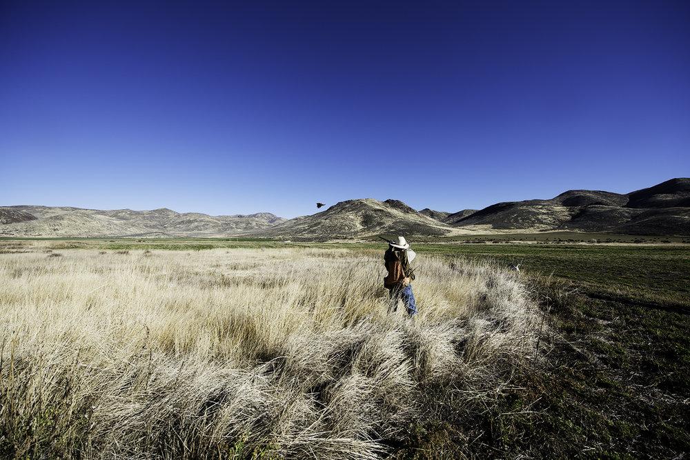 picabo angler pheasant hunt.jpg