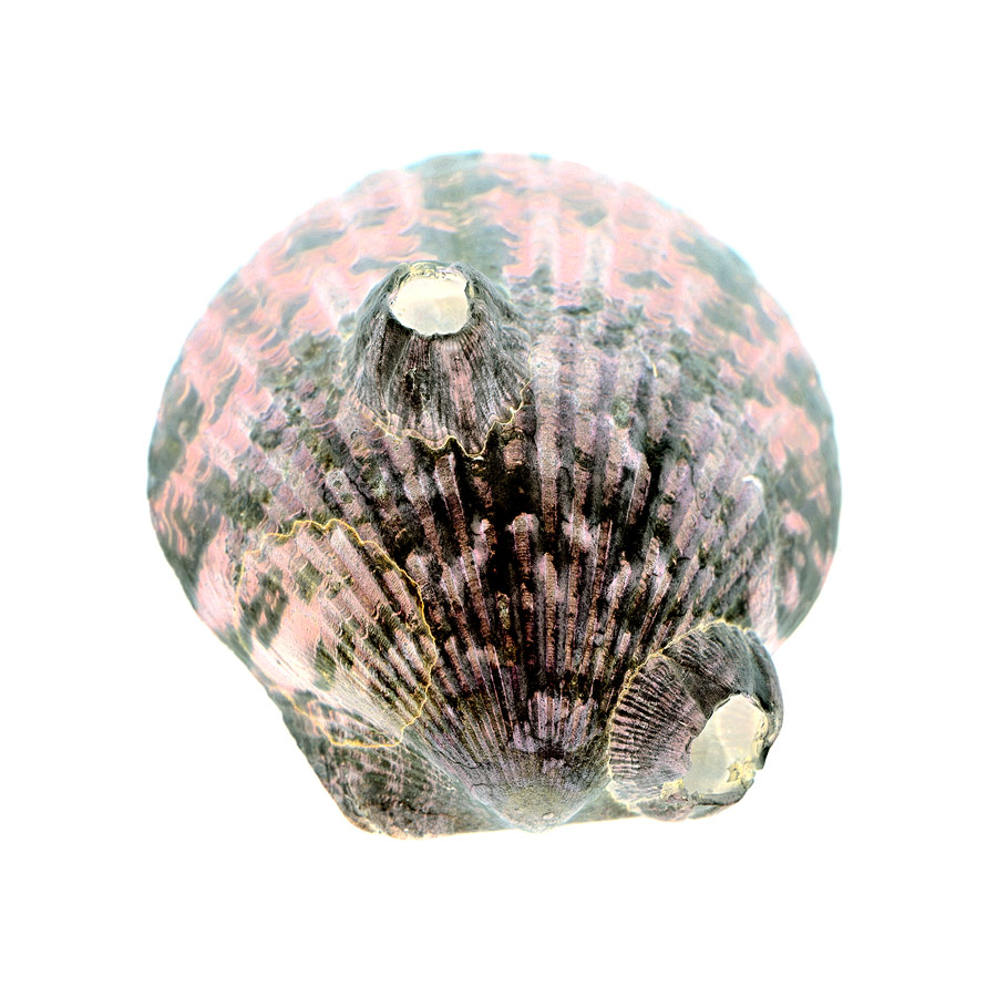 shell043-i.jpg
