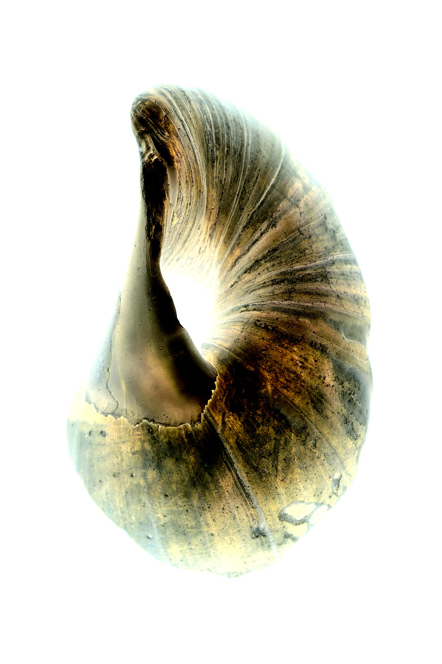 shell032-i.jpg