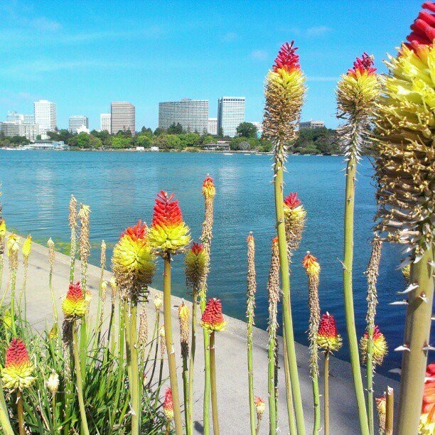 Beautiful, sunny day at Lake Merritt. Photo Submission to Visit Oakland.