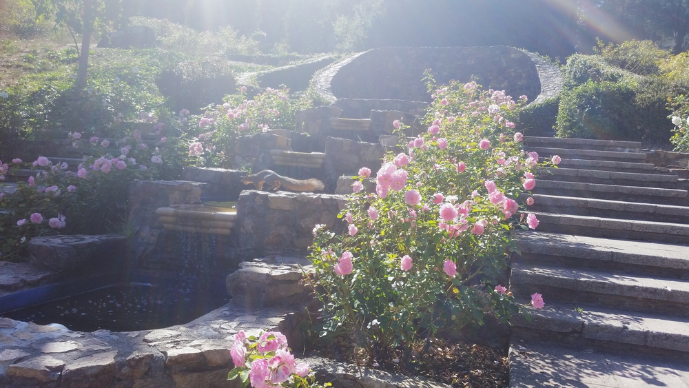 My oasis. The rose garden near my home where I reflect and create my business plans.