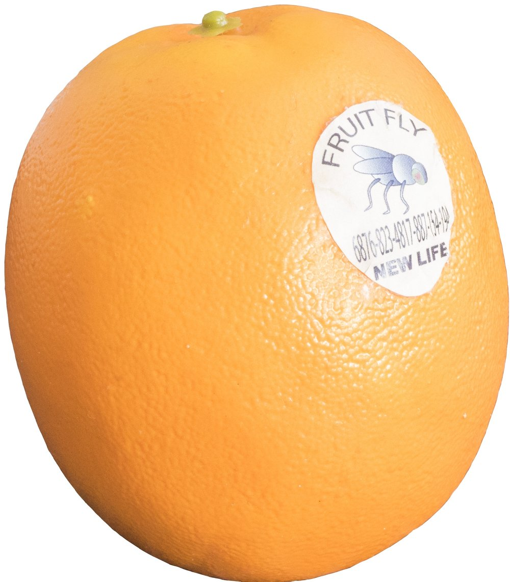 2018_FLAT_Orange Fruit.jpg