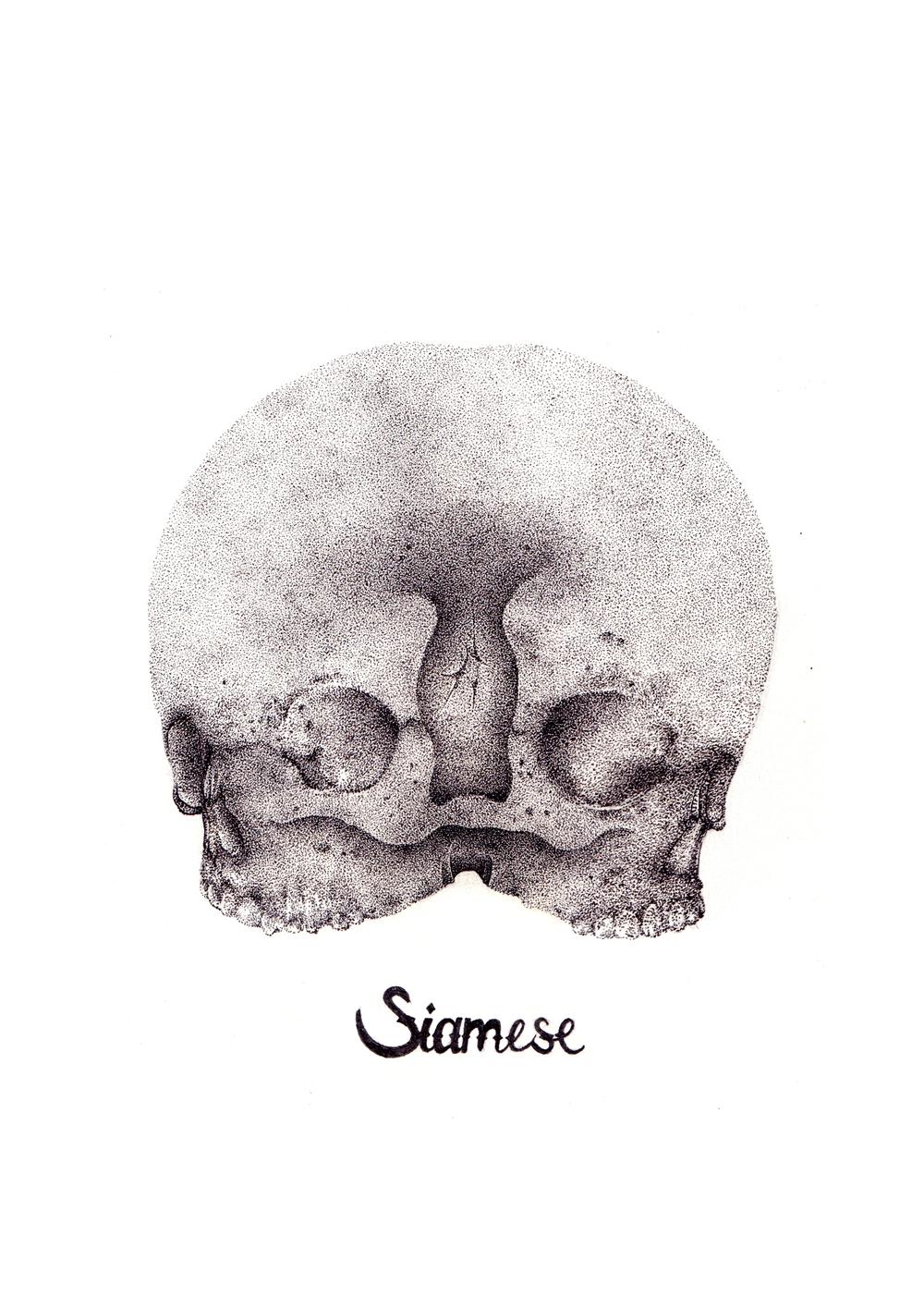Siamese.jpg