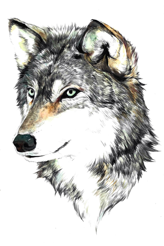 Wolf_01_20Jan2015.jpg