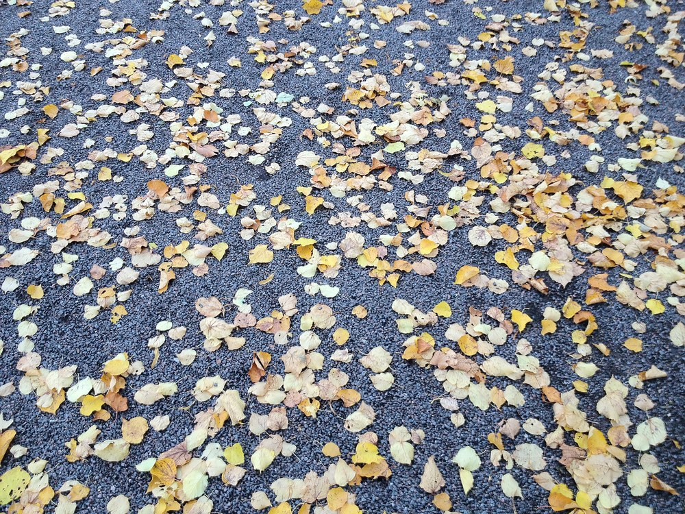 Nothing quite like the crunch of dead leaves against black soil greeting you with every step.