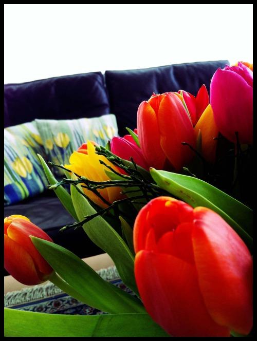 Anna_Lidstrom_tulip3.JPG