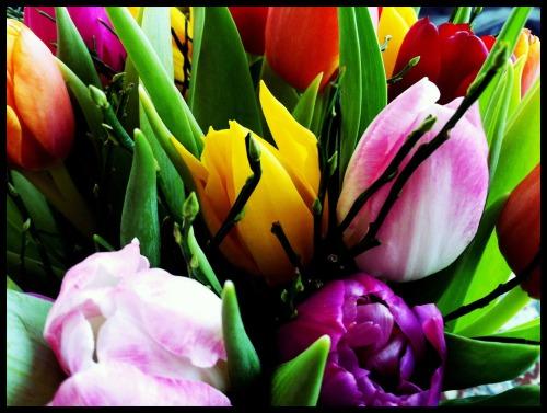 Anna_Lidstrom_tulip2.JPG