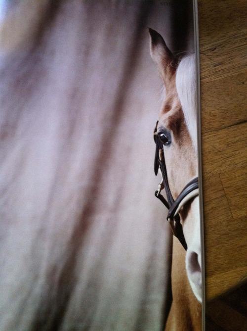Ponytale8.jpg
