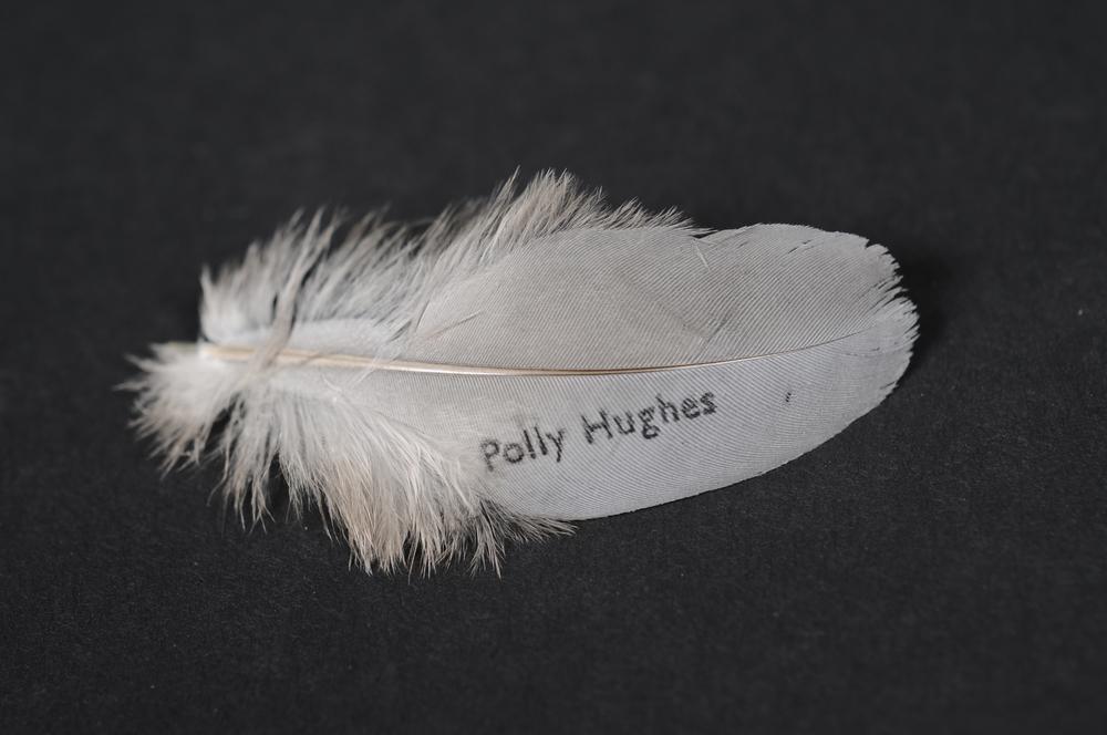 Polly Hughes feather.jpg
