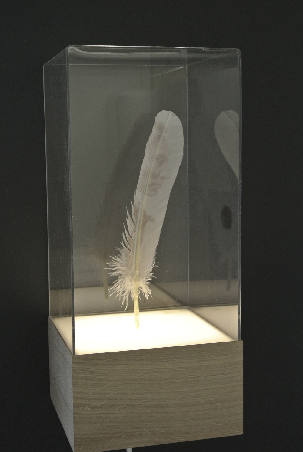 Lone Feather in light box