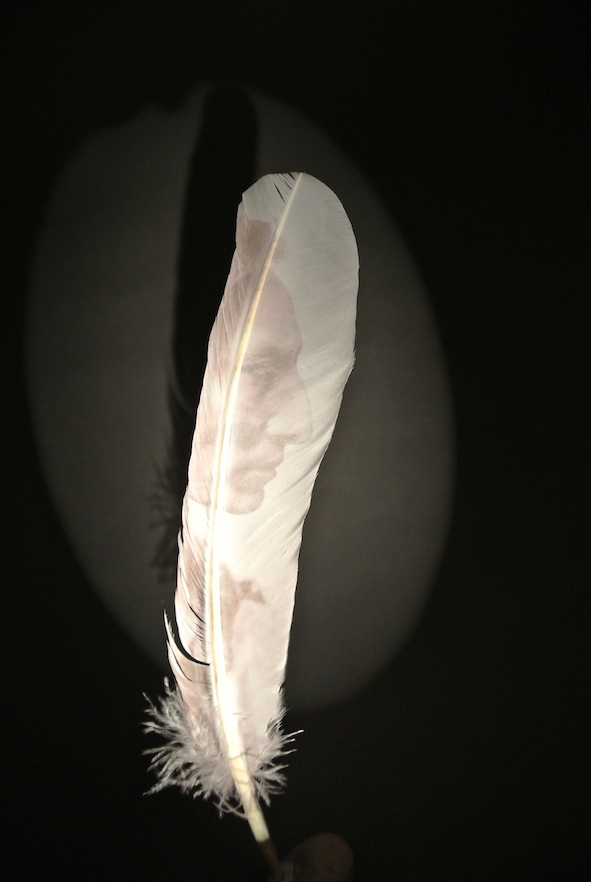 Lone Feather (detail)