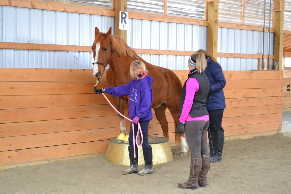 Working with the younger girls and their school horses. Quigley found it easy to stand with his front feet but he has arthritis in the hind end so that was as far as he went for the day.