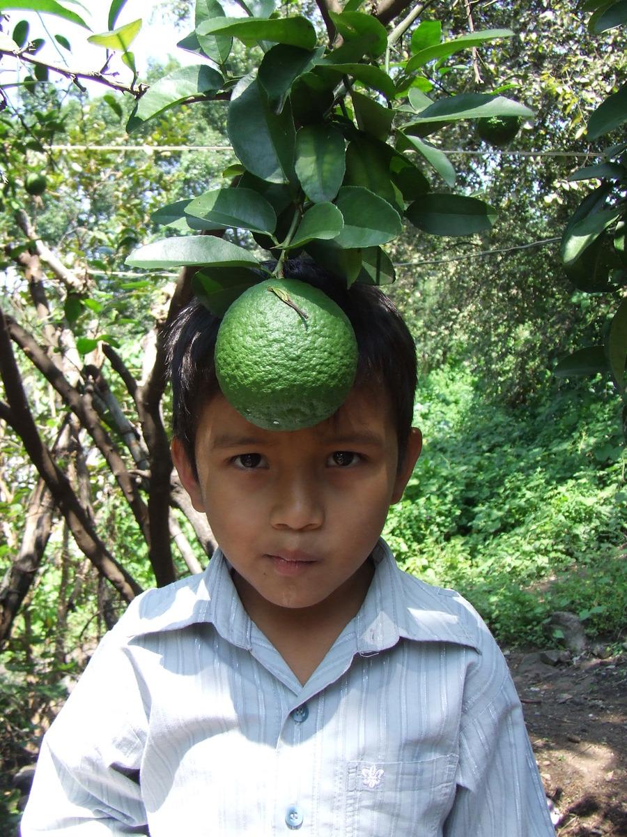 Piensa Verde -Carlos Ocampo Valdez